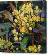 Mahonia Morning  Canvas Print