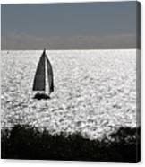 maine 44 Sailboat Canvas Print