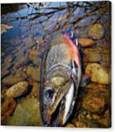 Maine Brookie Canvas Print