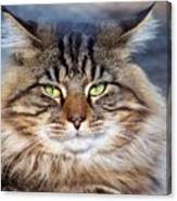 Maine Coon I Canvas Print