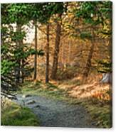 Maine Forest At Dusk Canvas Print