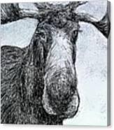 Maine Moose Canvas Print