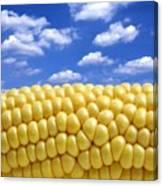 Maize Canvas Print
