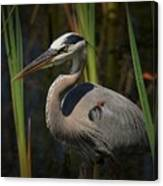 Majestic Bird Canvas Print