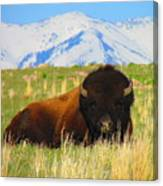 Majestic Buffalo  Canvas Print