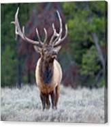 Majestic Bull Elk Canvas Print