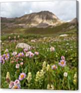 Majestic Colorado Alpine Meadow Canvas Print