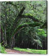 Majestic Fern Covered Oak Canvas Print