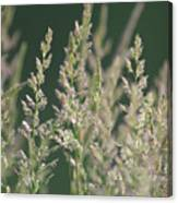Majestic Grass Canvas Print
