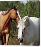 Majestic Horse Ride Canvas Print