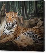 Majestic Leopard Canvas Print