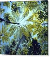 Majestic Treeferns Canvas Print