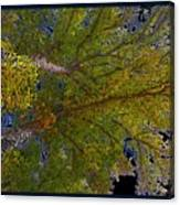 Majestic Trees Abstract Poster 2 Canvas Print