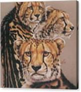 Majestic Vagabond Canvas Print