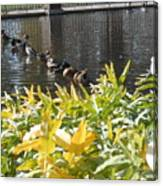 All My Ducks In A Row Canvas Print
