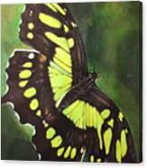Malacite Canvas Print