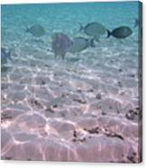 Maldives School Of Tropical Fish Canvas Print