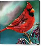 Male Cardinal And Snowy Cherries Canvas Print