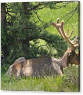 D10271-male Elk 2  Canvas Print