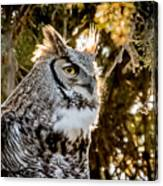 Male Great Horned Owl Portrait Canvas Print