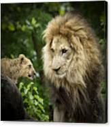 Male Lion And Cub Canvas Print