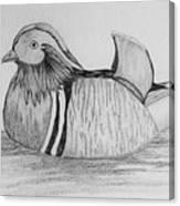 Male Mandrain Duck  Canvas Print