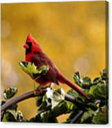 Male Northern Red Cardinal Canvas Print