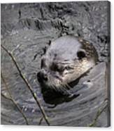 Male River Otter Canvas Print