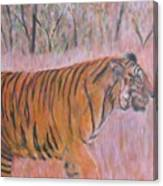 Adult Male Tiger Of India Striding At Sunset  Canvas Print