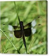 Male Widow Skimmer Dragonfly #4 Canvas Print