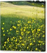 Malibu Creek Wildflowers Canvas Print