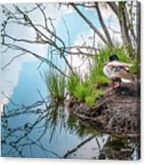 Mallard At Silver Lake Canvas Print