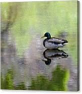Mallard In Mountain Water Canvas Print