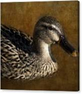 Mallard Matriarch Canvas Print