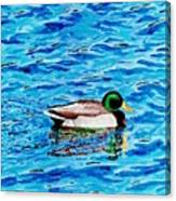 Mallard On Water Canvas Print