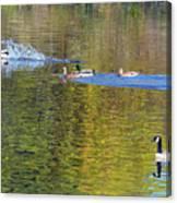 Mallard Splash Landing Canvas Print