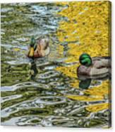 Mallards On Golden Pond 3 Canvas Print