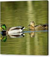 Mallards On The Lake Canvas Print