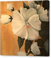Mallow Canvas Print