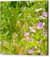 Malva And Chamomile In The Meadow Canvas Print