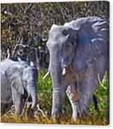 Mama And Baby Elephant Canvas Print