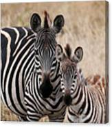 Mama And Baby Zebra Canvas Print