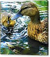 Mama And Chick Canvas Print