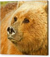 Mama Bear Close Up Canvas Print