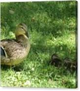 Mama Duck Canvas Print
