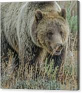 Mama Grizzly Blondie Canvas Print