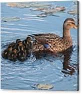 Mama Mallard And Her Ducklings Canvas Print