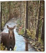 Mama Moose And Calf Canvas Print