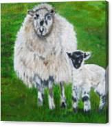 Mamma And Baby Sheep Of Ireland Canvas Print