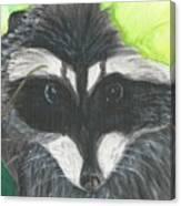 Mamma Raccoon  Canvas Print